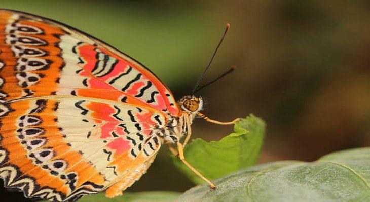 9x meest bijzondere vlinders