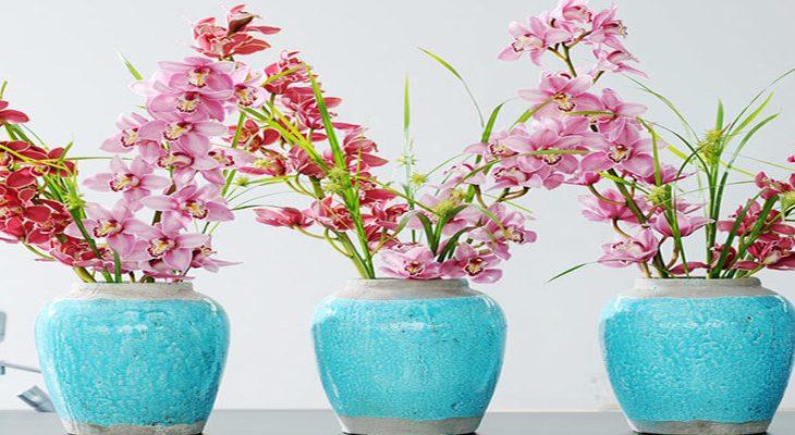 Orchidee als snijbloem