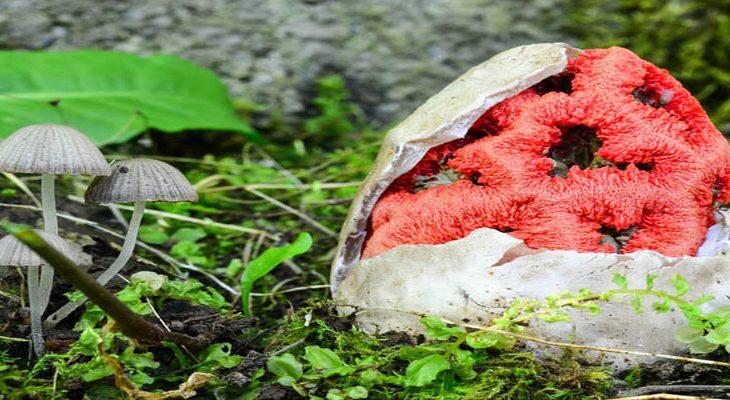 6x bijzondere en felgekleurde paddenstoelen