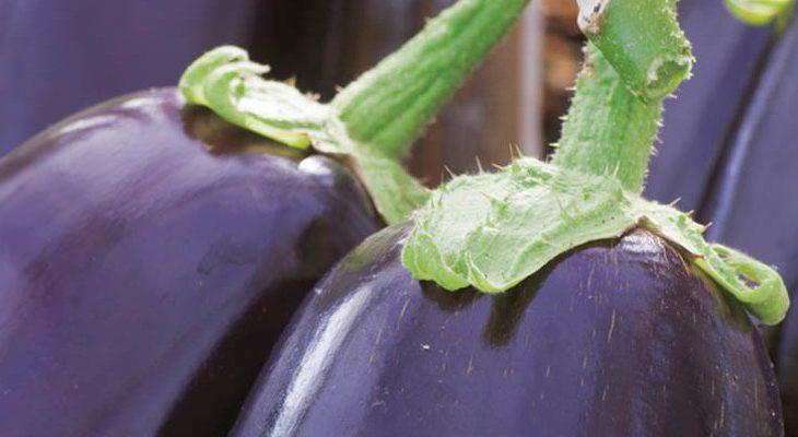 Zelf aubergine kweken