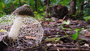 10x meest bizarre paddenstoelen