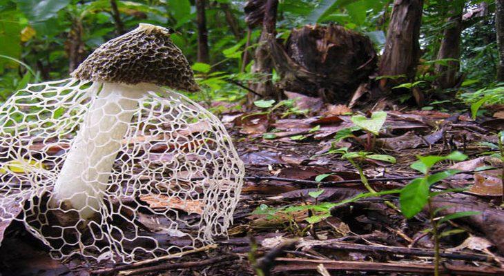 10x Vijver Inspiratie : 10x meest bizarre paddenstoelen tuinen