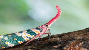 10x meest bijzondere insecten