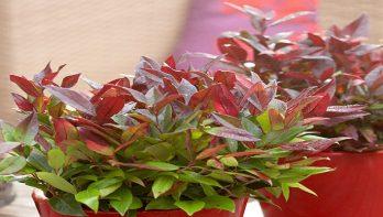 5x groenblijvende herfstplanten