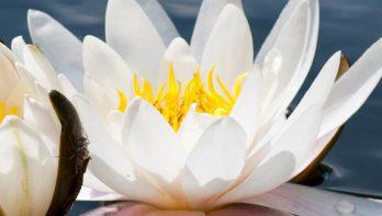 Tips voor de vijvertuin van Ada Hofman