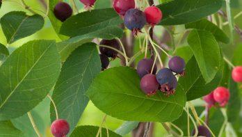 Krentenboompje: alle seizoenen mooi