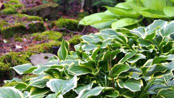 Schaduwplanten op droge grond