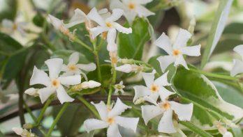 Witte bloemenweelde