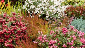 Kleur en geur in de najaarstuin