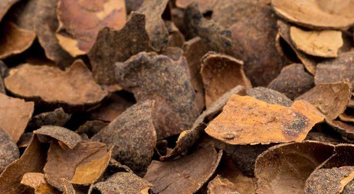 Cacaodoppen als onkruidwerende bodembedekker