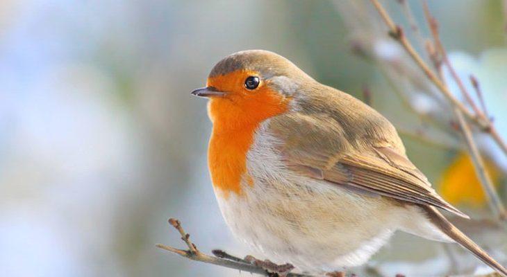Gek op vogels? Doe mee met de Nationale Tuinvogeltelling