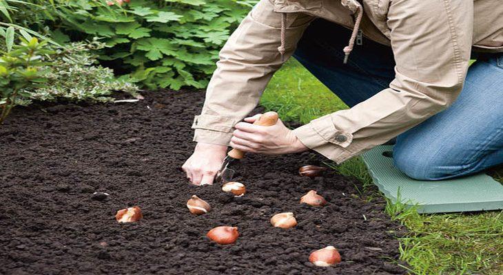 Voorjaarsbollen planten