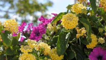 De beste planten voor op het balkon
