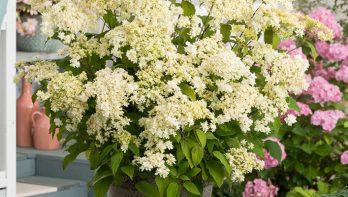 6x populaire bloeiende planten voor de zomer
