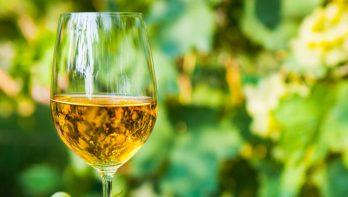 Wijn maken met druiven uit eigen tuin