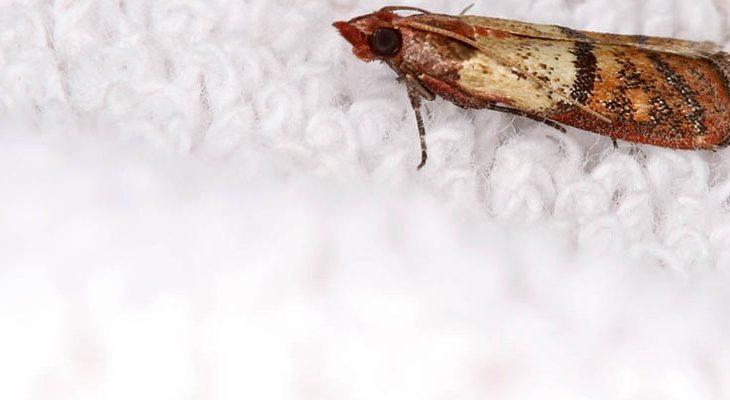 Motten in huis bestrijden