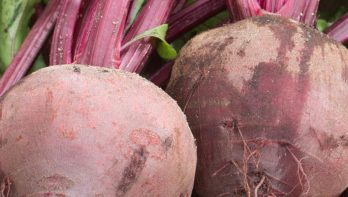 Superfood rode bieten kweken