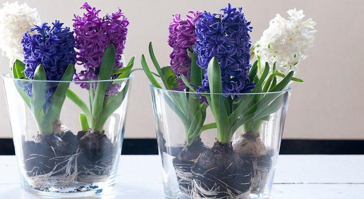 Gebruik servies voor je bloembollen in huis