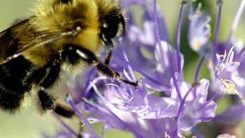 Bijenvriendelijke tuin dankzij BIJzondere tips