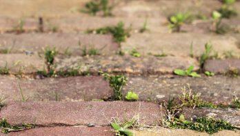 Onkruidvrije tuin