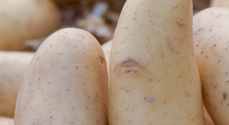 Zelf aardappels kweken