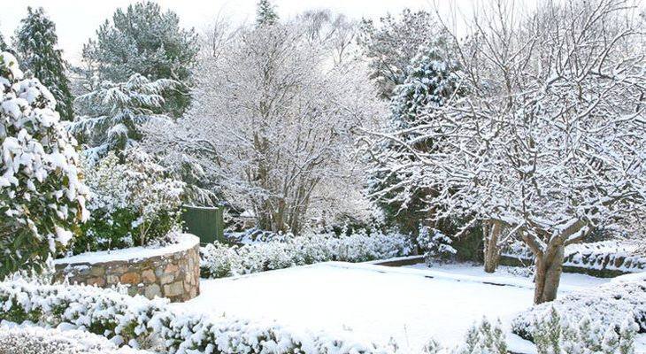 Beperk vorstschade in je tuin