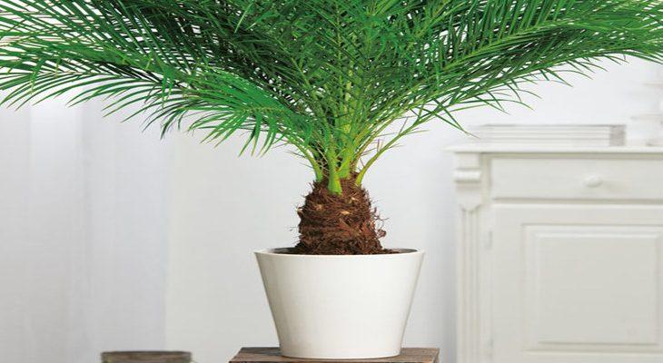 6x grote kamerplanten als blikvanger