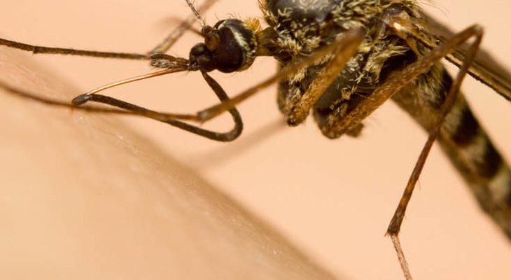 Muggen voorkomen en bestrijden