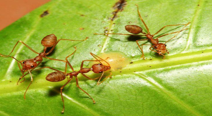 Mieren voorkomen en bestrijden