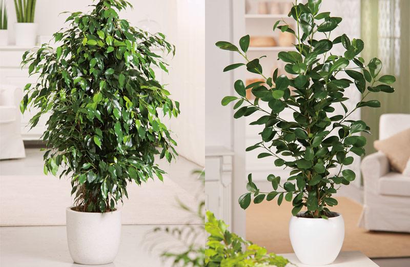 Grote Plant Woonkamer : Grote kamerplanten als blikvanger tuinen