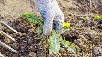 Natuurlijke bestrijding in de tuin of het balkon