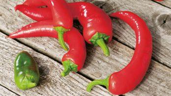 Zelf peper kweken