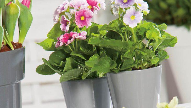 Kleur in het voorjaar op balkon en terras