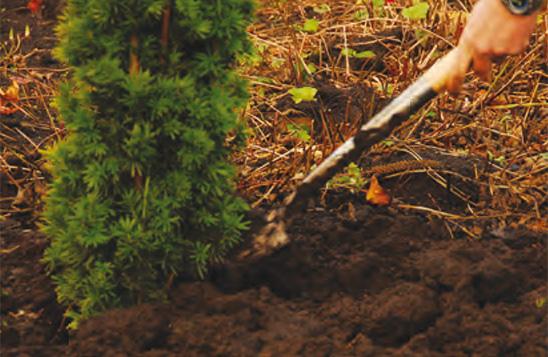Groenblijvende hagen van coniferen