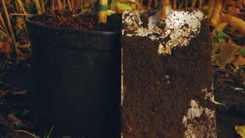 Klimplanten planten