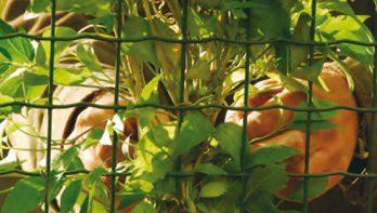 3 dimensionaal tuinieren met klimplanten