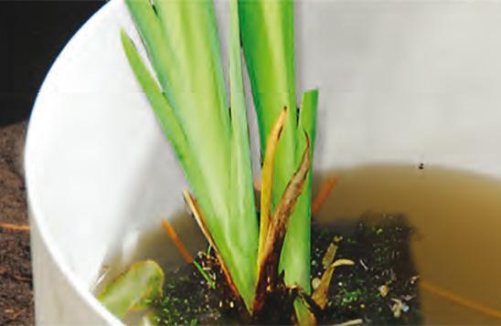Moerasplanten planten