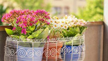 5x zomerbloeiers voor op het balkon