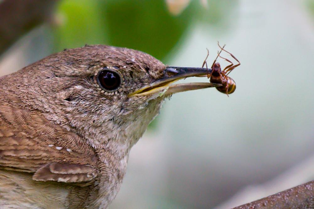 Vogel, voer, insecten,