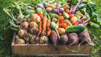 oogstkalender, oogsten, kalender, overzicht, tuinen.nl