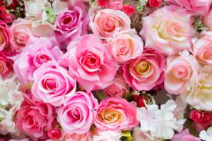 roos, geur, geurige blikvangers, tuinen.nl