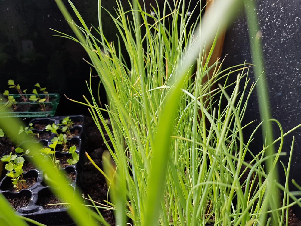 tuinen.nl, michels moestuin, moestuin, zaaien, planten