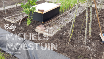 Michels Moestuin, moestuin, blog, greppel, onkruid, tuinen.nl