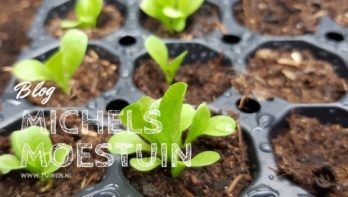 Home sweet home - Michels Moestuin