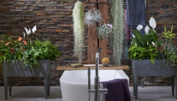 badkamer, badkamerplanten, kamerplanten, tuinen.nl