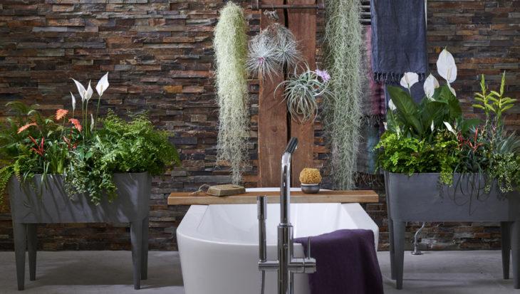 4x planten voor in de badkamer