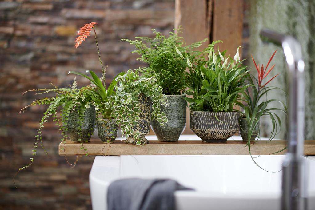 Tillandsia, badkamer, badkamerplanten, kamerplanten, tuinen.nl