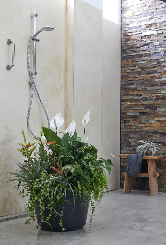 Spathiphyllum, lepelplant, badkamer, badkamerplanten, tuinen.nl