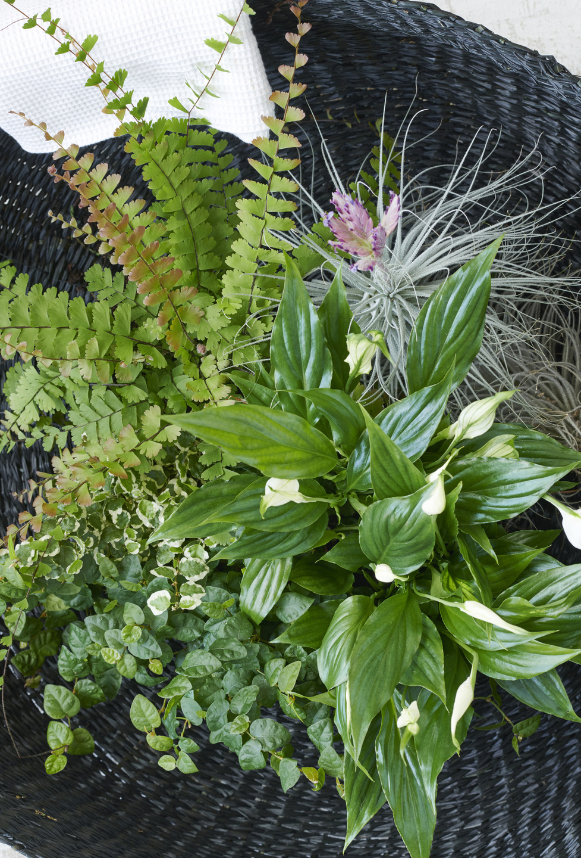 badkamerplanten, badkamer, kamerplanten, tuinen.nl