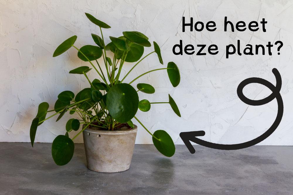 winactie, winnen, plant, boek, my green house, tuinen.nl